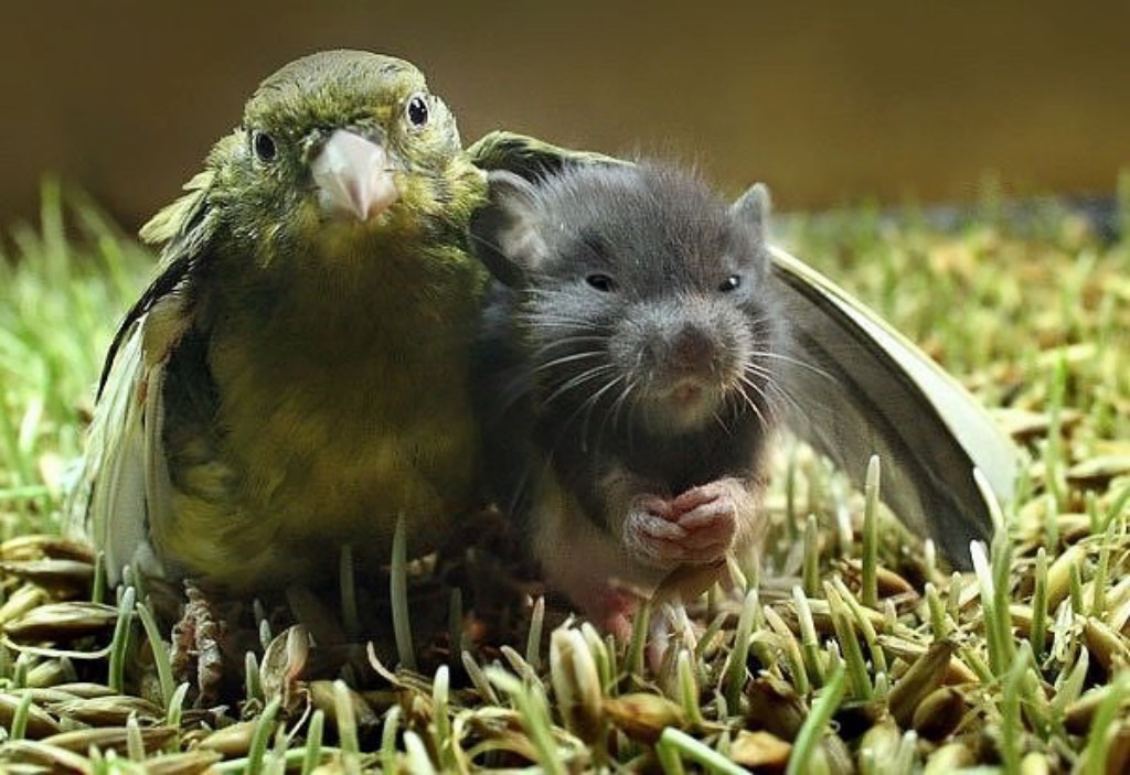 bird and rat